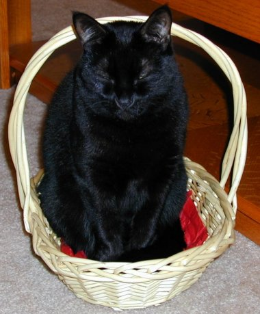 Lilith in the Basket
